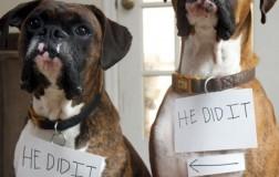 Pet confessions