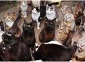 Too Many Cats?