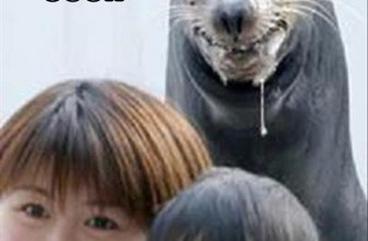 That time when you wanted to punch a sea lion in the face